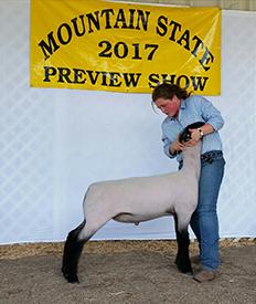 MSB Suffolk Club Lambs :: Winners