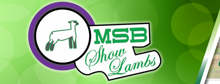 MSB Suffolk Club Lambs :: Sires